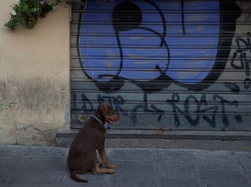 dog guarding wine