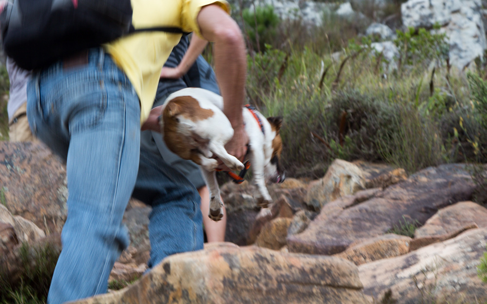 cape town lions head mountain dog hiking