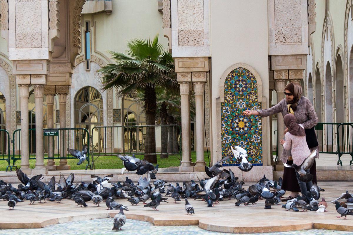 hassan II mosque feeding birds