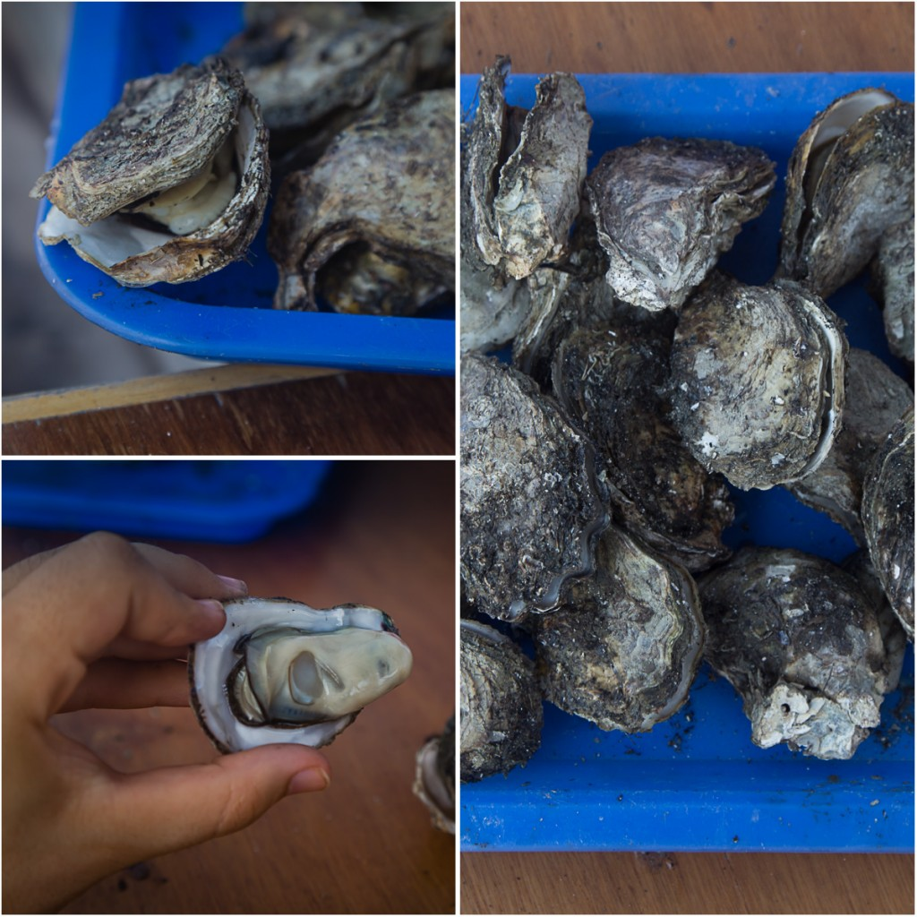Qigu Lagoon Tainan, Taiwan Oysters